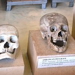 Skulls dating back to the 14th and the 15th centuries