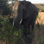One elephant of many!!