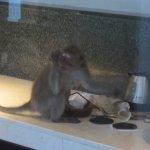 グラスをいじる猿