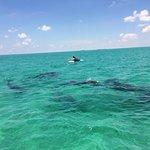 Foto de Dolphin Safari