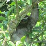 Sloth Guayabo Lodge