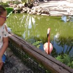 Photo of Flamingo Gardens