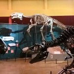 Museo del Disierto Chihuahuense