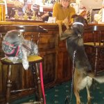 1 pint please, woof woof