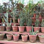Beautiful nursery of various plants