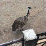 Curacao Ostrich Farm Foto