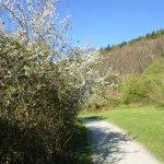 Good walking path