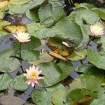 Photo de Mapro Garden