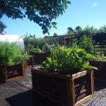 Organic garden treats