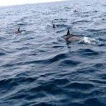 dauphins entre île de groix guidel