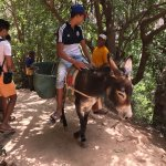 Donkeys are good at climbing. Poor donkey....