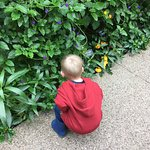 Grandson marveling at the many butterflies in the greenery