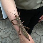 Staff showing bugs