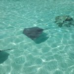 Photo of Albert Moana Lagoon Tour