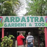 Visit the  Ardastra Gardens Zoo and discover local wildlife in The Bahamas