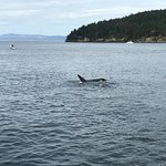 Wonderful time whale watching with my family who were visiting from Texas.  The whales did not d