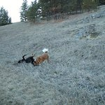 Happy Dogs on Walk & Roll in field at Eden Valley Guest Ranch