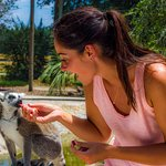 You won't want to miss hand-feeding our lemurs!