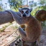 Lemur love <3!
