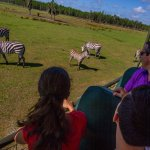 You might even see one of our baby zebras while on safari!