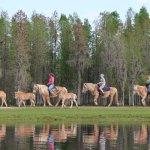 Take your safari on horseback!