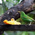 Photo de Arenal Oasis Wildlife Refuge