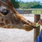 Giraffe Ranch