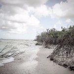 Mangroves lining the Gulf