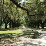 Live Oak lined driveway