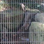Photo de Kujukushima Zoological and Botanical Garden Morikirara