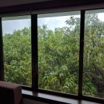 view of the orchard from our room.