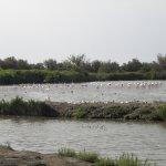 Photo de Le Parc Ornithologique de Pont de Gau