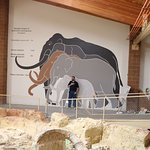 Tour Guide and Mammoth / Elephant Size Comparison