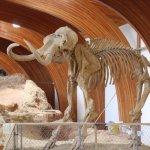 Columbian Mammoth Reconstruction