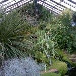 Nice little indoor garden