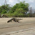 Krokodil am anderen Ufer der Flussmündung