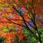 温泉入口付近の紅葉。12月のはじめ頃まで紅葉が楽しめます。