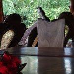 Tierischer Besuch am Frühstückstisch