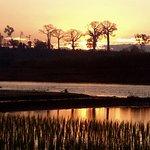ccoucher de soleil sur rizière et baobabs, à un campement