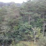 Blick in den angrenzenden Wald