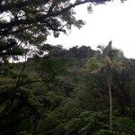 On the rainforest walk