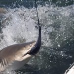 Foto de Key West Extreme Adventures Shark Tours