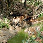 bébés tigres qui jouent dans le bassin