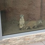 Photo of Yaroslavl Zoo
