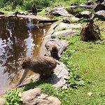 Małpki mają swoje jeziorko w którym bawią się