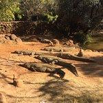 Kwena Crocodile Farm Foto