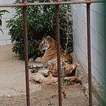 Foto di Safari Zoo