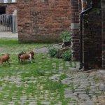 Temple Newsham farm . really fast piglets!