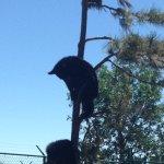 Cubs climbing trees
