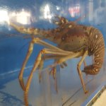 Photo de Blue Lobster